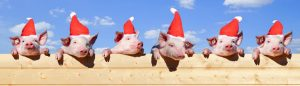 Ferkel mit Weihnachtsmützen